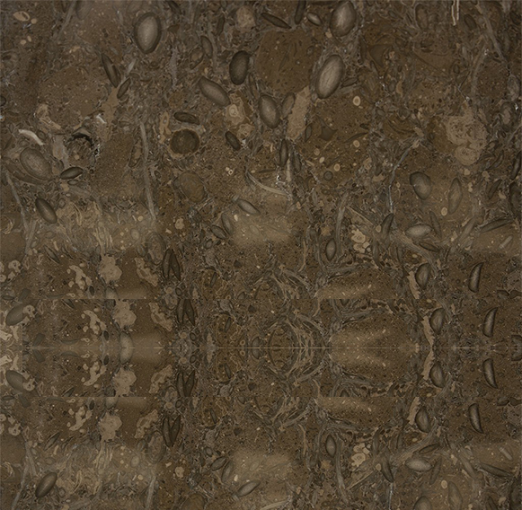 Fossil Brown 1024x683